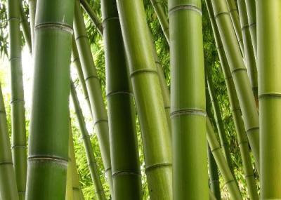 Decoracion bambu 000
